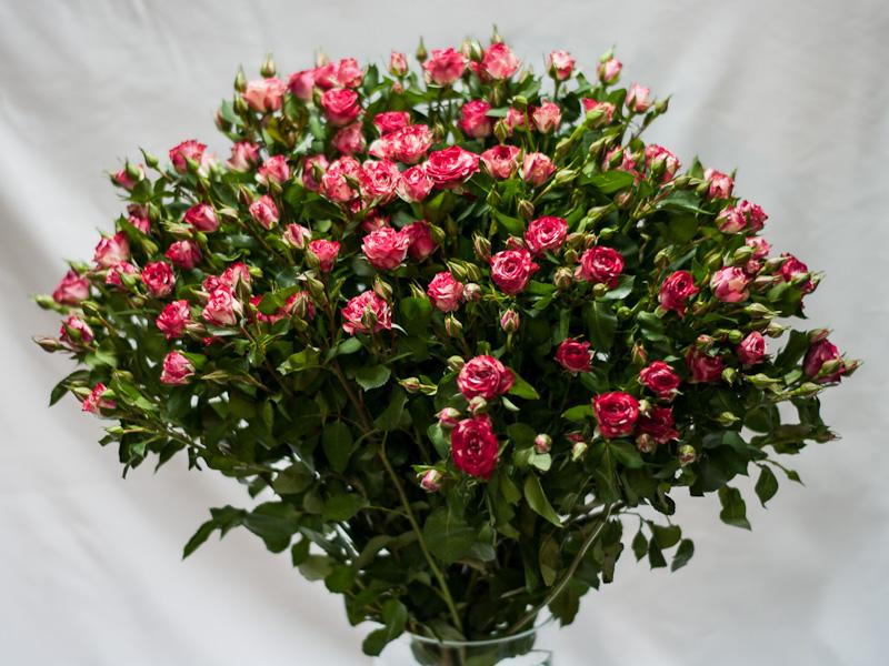 этот как выглядят кустовые розы фото видов