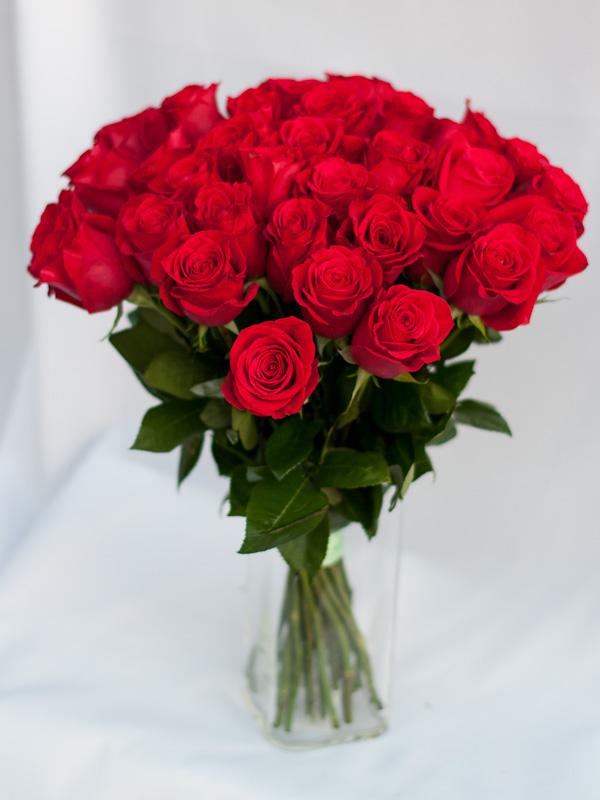 Роза эквадорская Фридом