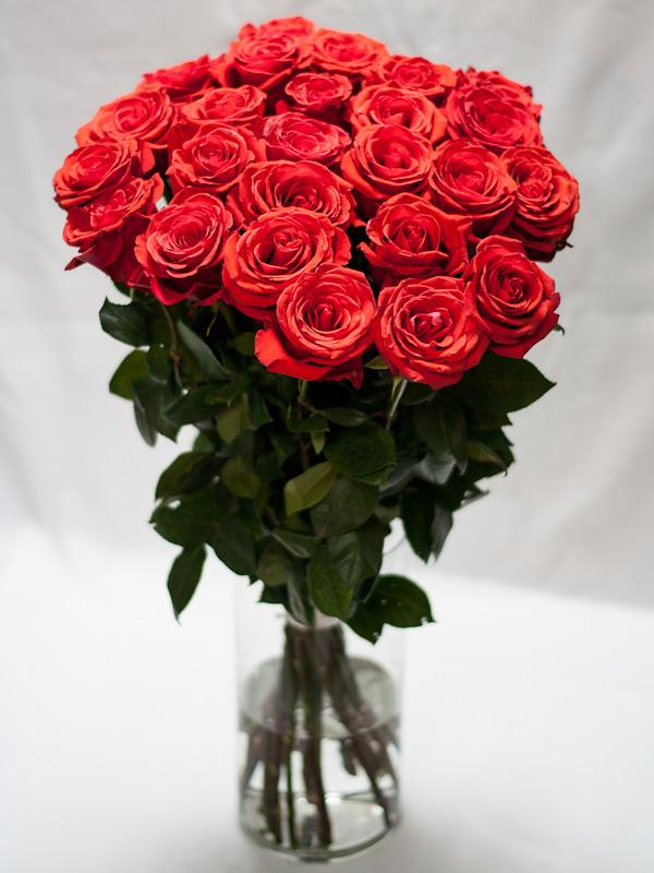 Роза эквадор алаяНина