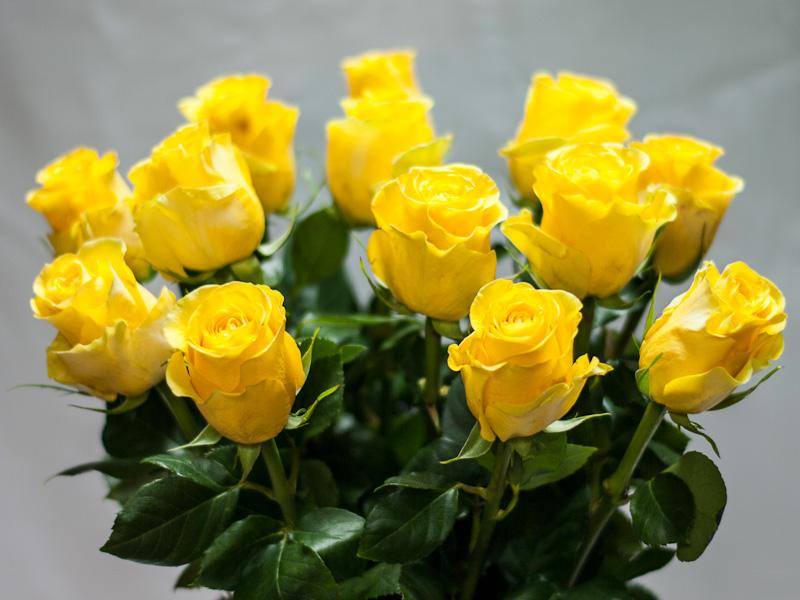 Роза эквадорская желтая