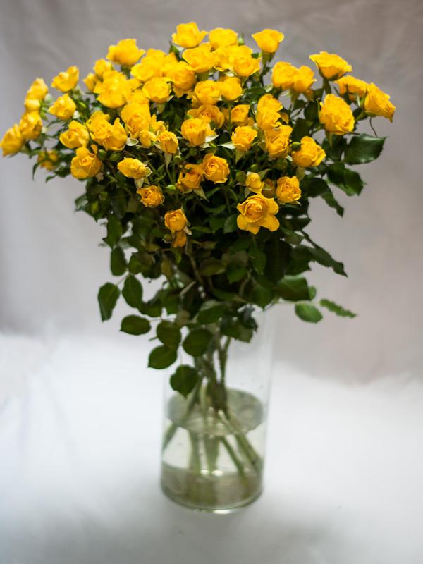 Роза кустовая желтая