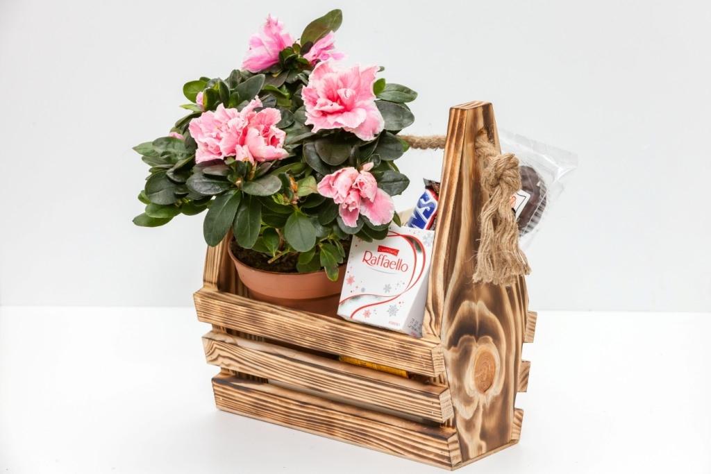 Азалия с рафаэлло в деревянном кашпо