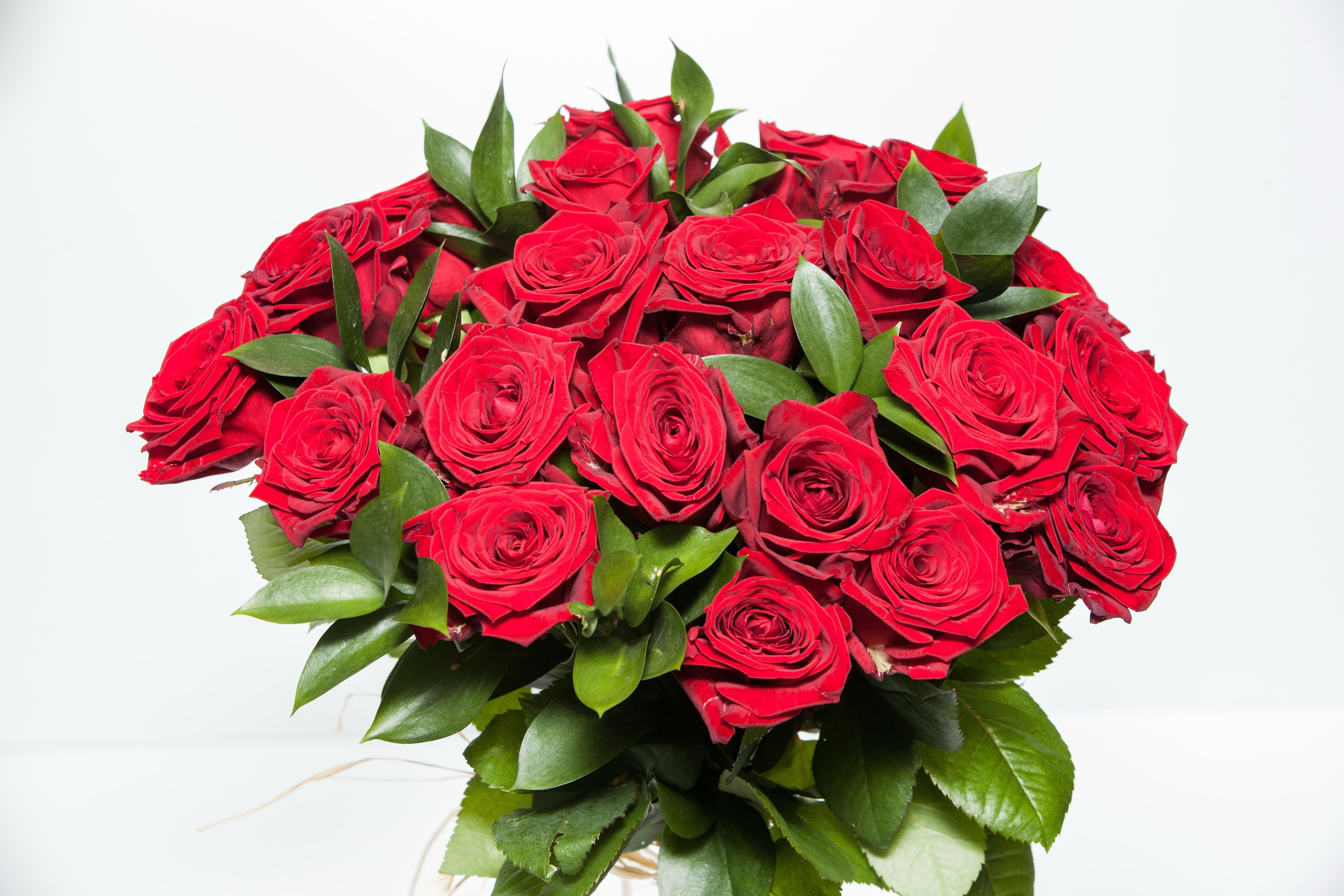 Роскошные розы эквадор 25 шт